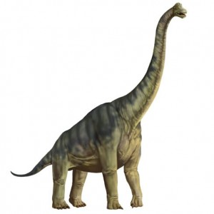 Plateosaurus Late Triic Dinosaur A Large Herbivore It May Have Sometime Reared