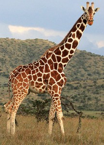 List of mammals of South Africa  Wikipedia