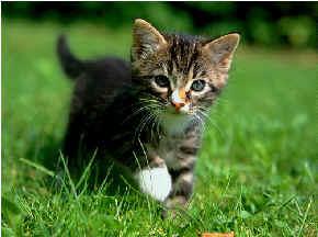 cat ultrasound